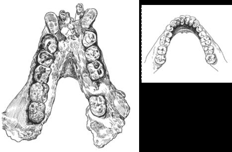 gigantopithecus_comparison