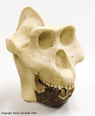 Gigantopithecus 301 Moved Permanently