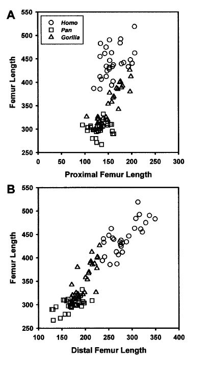 Femur Length 1