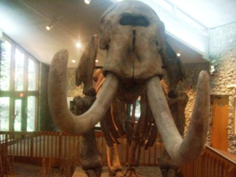 Mastodon 1