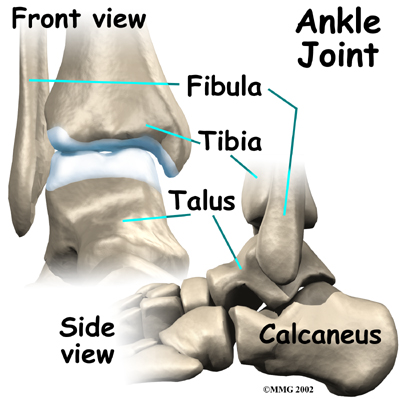 "From <a href=""http://www.eorthopod.com/images/ContentImages/ankle/ankle_osteoarthritis/ankle_osteoarthritis_anatomy01.jpg"">here</a>"