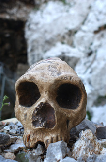 "<a href=""http://www.gib.gi/museum/gib%20neanderthals.htm"">Source</a>    1998 marked the 150th anniversary of the discovery of the ""Gibraltar Skull"" which was blasted out of Forbes' Quarry on the North Face of the Rock of Gibraltar. The specimen was presented on the 3rd March, 1848, by Lieutenant Edmund Flint to the Gibraltar Scientific Society and the discovery nearly placed Gibraltar at the forefront of 19th Century early human studies. Fate determined that the significance of the skull was not realised and it remained undisclosed for another sixteen years. Had it been revealed earlier the human type known as Neanderthal, after the discovery of a skeleton in the Neander Valley in Germany eight years after the Gibraltar find, then the naming may have been very different."